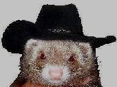 Ferret in cowboy hat costume.